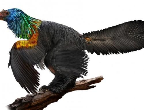 Eddig ismeretlen dinoszauruszt fedeztek fel Kínában